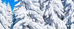 Travel Restrictions ease snow falls